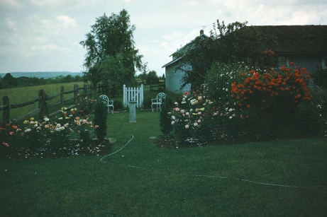 This rose gate built by my grandfather led to the Granary for easy access to his grandchildren.