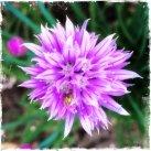 assay flower