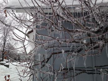 Espalier in ice