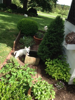 Baby Atti at the bird bath in the herb bed