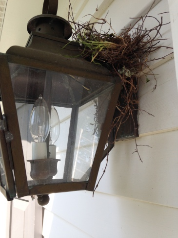 Sparrow nest in the back door lantern