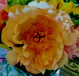 An unusual coral peony from a friend